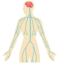 内臓疲労やストレスなどによって乱れた自律神経を整える