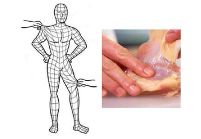 筋膜のイラスト
